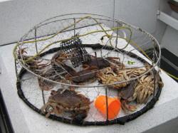 Crab trap dinner